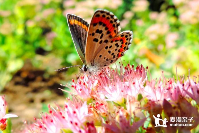 翩翩飞舞的蝴蝶才是春天到来的最好证明.